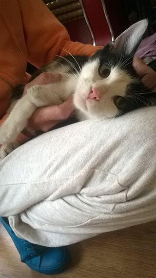 Toto, kot do adopcji, Poznań, Swarzędz