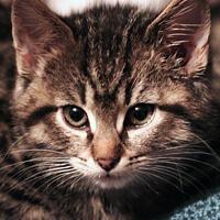 Apo, kot do adopcji, Poznań, Dopiewo