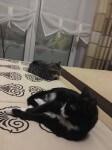 elbrus i kralinka w domu stalym