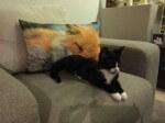 elbrus i kralinka w domu stalym (2)