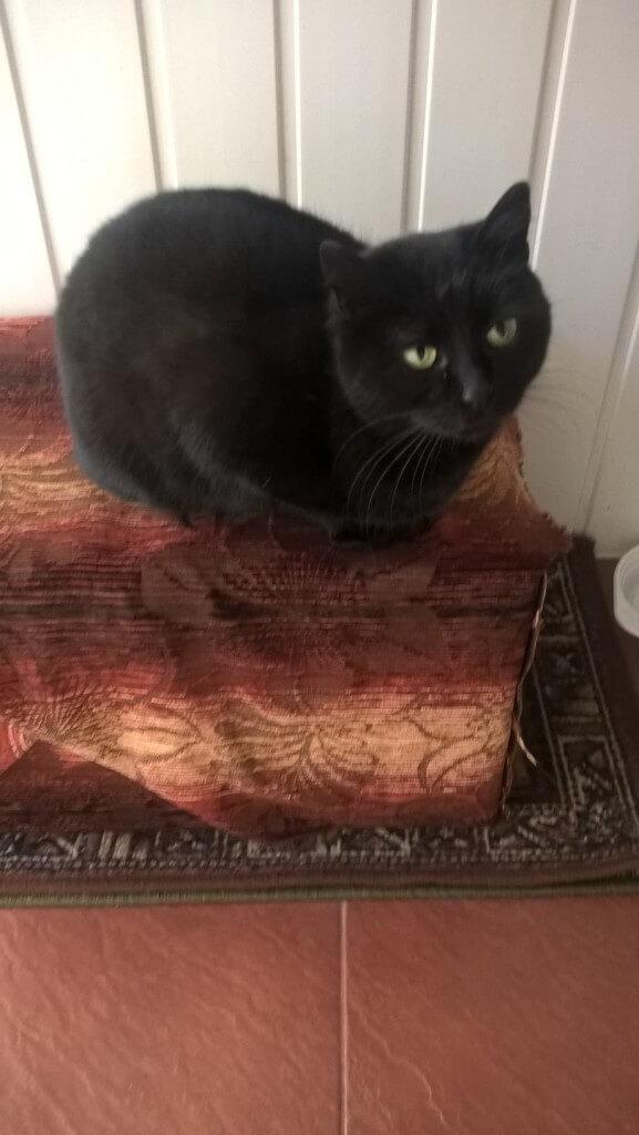 Koteczka po przejściach
