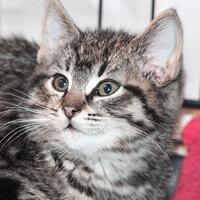Loa, kotka do adopcji, Poznań, Dopiewo
