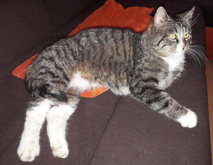 Znaleziono kota w Dopiewie (1)