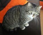 Znaleziono kota w Dopiewie (2)