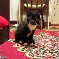 Mikado, kotka do adopcji, Poznań, Dopiewo