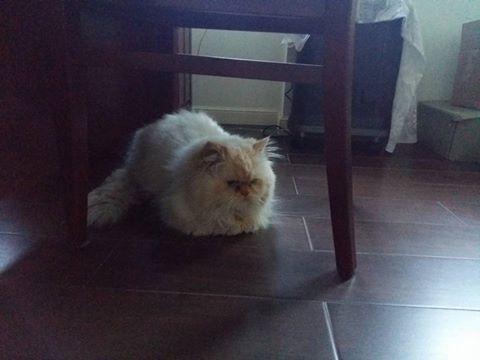Puchacz zamieszkał dziś w stałym domu.