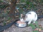 Koty z koscielnej - niebawem straca schronienie (1)