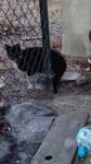 Koty z koscielnej - niebawem straca schronienie (3)