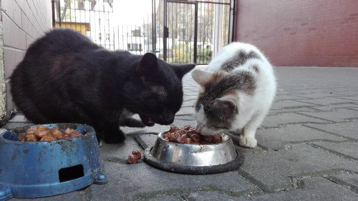 Koty z koscielnej - niebawem straca schronienie (4)