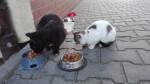 Koty z koscielnej - niebawem straca schronienie (5)