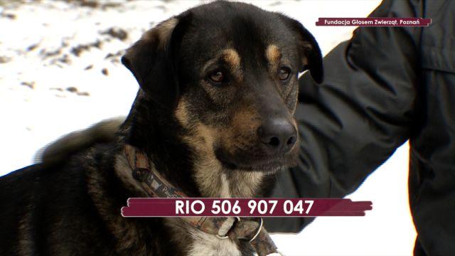 Rio-szuka-domu