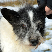 Eryk, pies do adopcji Poznań, Dopiewo