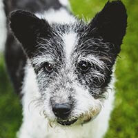 Eryk, pies do adopcji, Poznań, Dopiewo