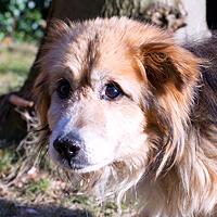 Florek, pies do adopcji, Poznań, Dopiewo