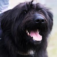 Joko, pies do adopcji, Poznań, Dopiewo