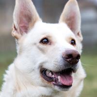 Peru, pies do adopcji, Poznań, Dopie