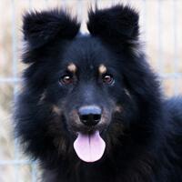 Leno, pies do adopcji, Poznań, Dopiewo
