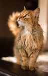 Kocia pięknosc Puchatka (1)