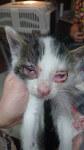 Maluchy i koci katar (2)