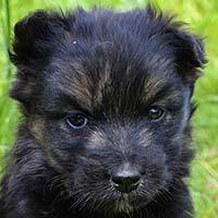 Luiza, pies do adopcji, Poznań, Dopiewo