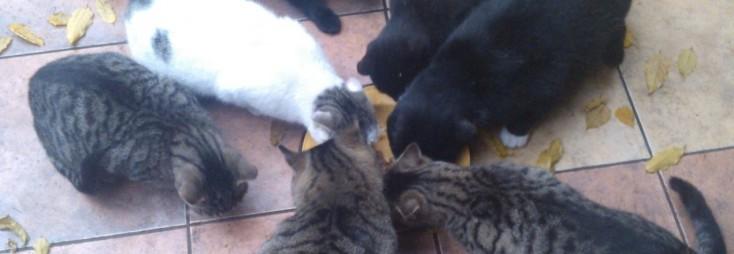 zbiorka na bezdomne koty