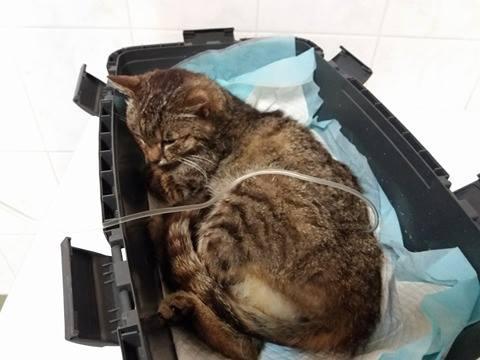 dramat kotki lisowki jeszcze sie nie skonczyl (2)