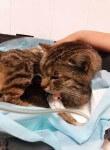 dramat kotki lisowki jeszcze sie nie skonczyl (3)