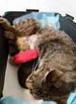 dramat kotki lisowki jeszcze sie nie skonczyl (4)