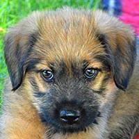 Eden, pies do adopcji, Poznań, Dopiewo