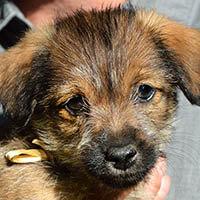 Elif, pies do adopcji, Poznań, Dopiewo