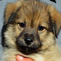 Elis, pies do adopcji, Poznań, Dopiewo