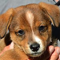 Emma, pies do adopcji, Poznań, Dopiewo