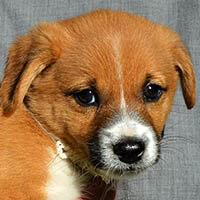 Eska, pies do adopcji, Poznań, Dopiewo