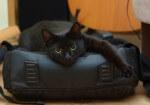 kotka mini szuka spokojnego domu (1)