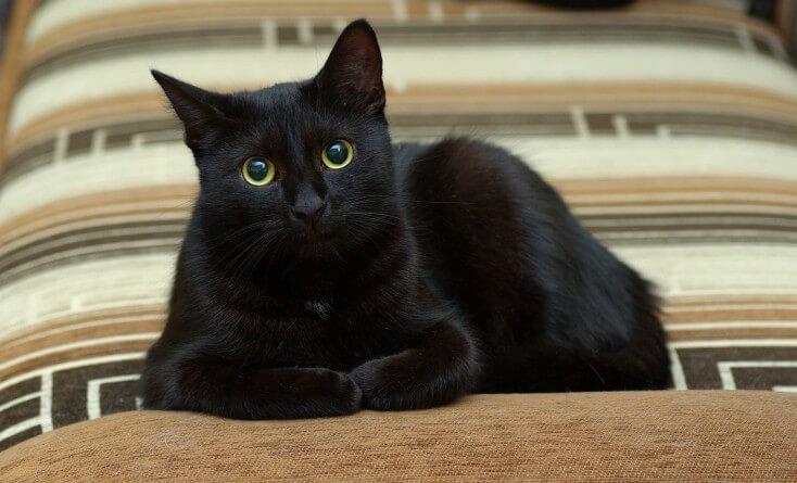 kotka mini szuka spokojnego domu (2)