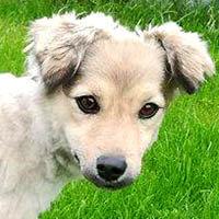 Lady, pies do adopcji, Poznań, Dopiewo