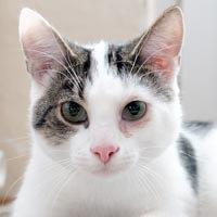 Jack, kot do adopcji, Poznań, Dopiewo
