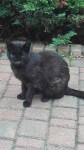 joko kotka ze zdeformowana glowa (6)