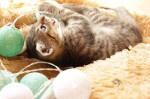 miaukotek szuka domu (1)