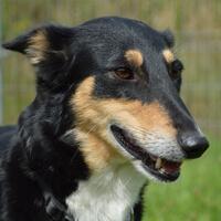 Alija, pies do adopcji, Poznań, Dopiewo