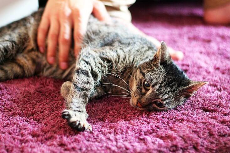 Przedstawiamy Dido - kocurka, który był kotką