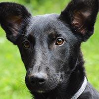 Frugo, pies do adopcji, Poznań, Dopiewo