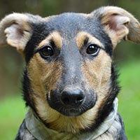 Kimi, pies do adopcji, Poznań, Dopiewo