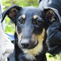 Koni, pies do adopcji, Poznań, Dopiewo