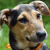 Mili, pies do adopcji, Poznań, Dopiewo