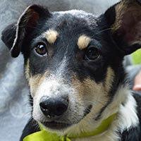 Milo, pies do adopcji, Poznań, Dopiewo