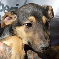 Mino, pies do adopcji, Poznań, Dopiewo
