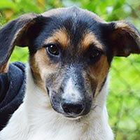 Monti, pies do adopcji, Poznań, Dopiewo