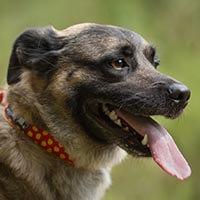 Norek, pies do adopcji, Poznań, Dopiewo