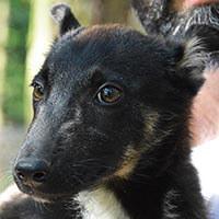 Pies do adopcji, Poznań, Dopiewo